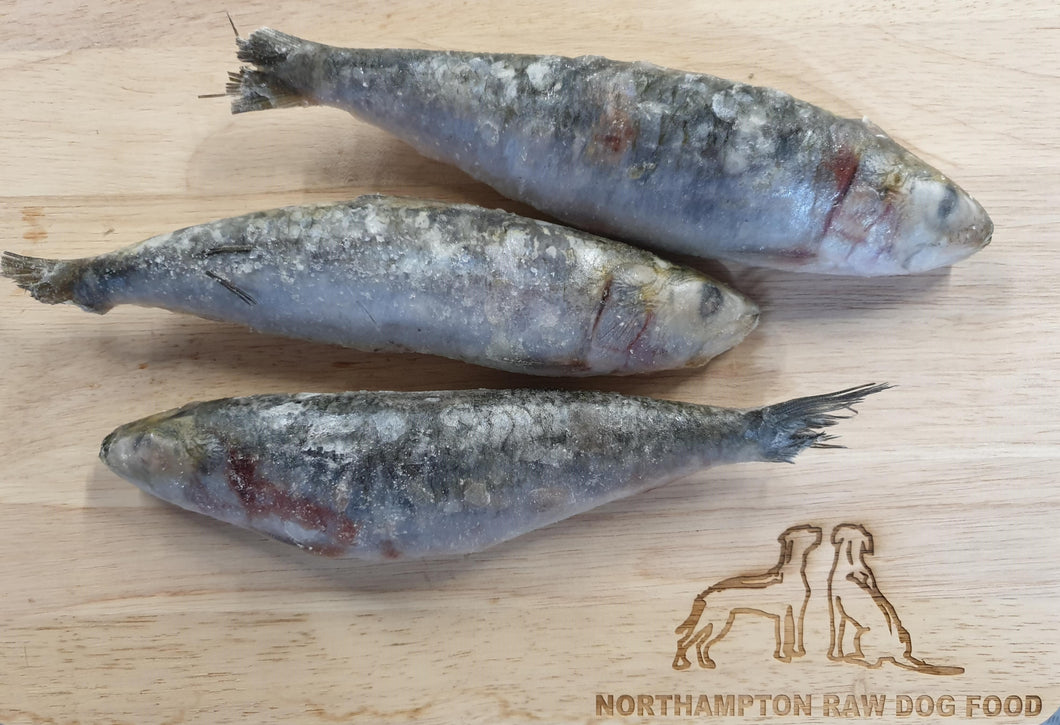 Sardines 1kg - Food for dogs, cats and other pets online | Northampton Raw Dog Food!