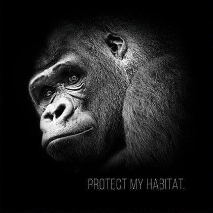 Protect The African Wildlife Foundation