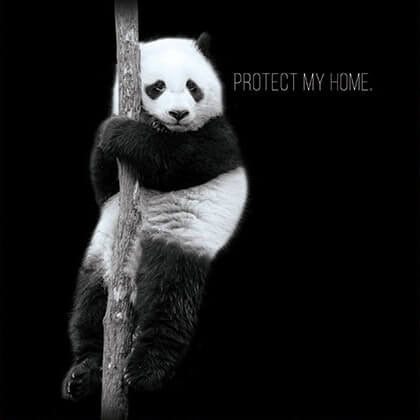 Protect Pandas International
