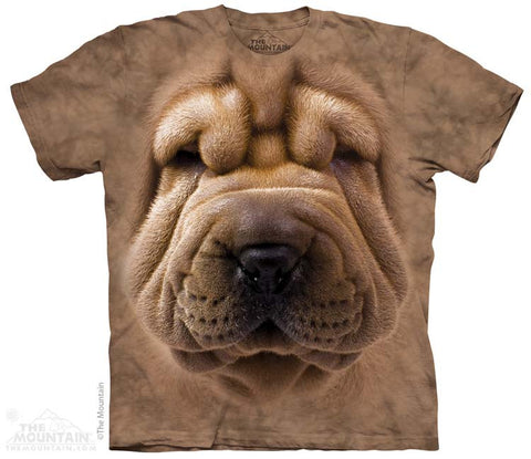 3679 Big Face Shar Pei Puppy