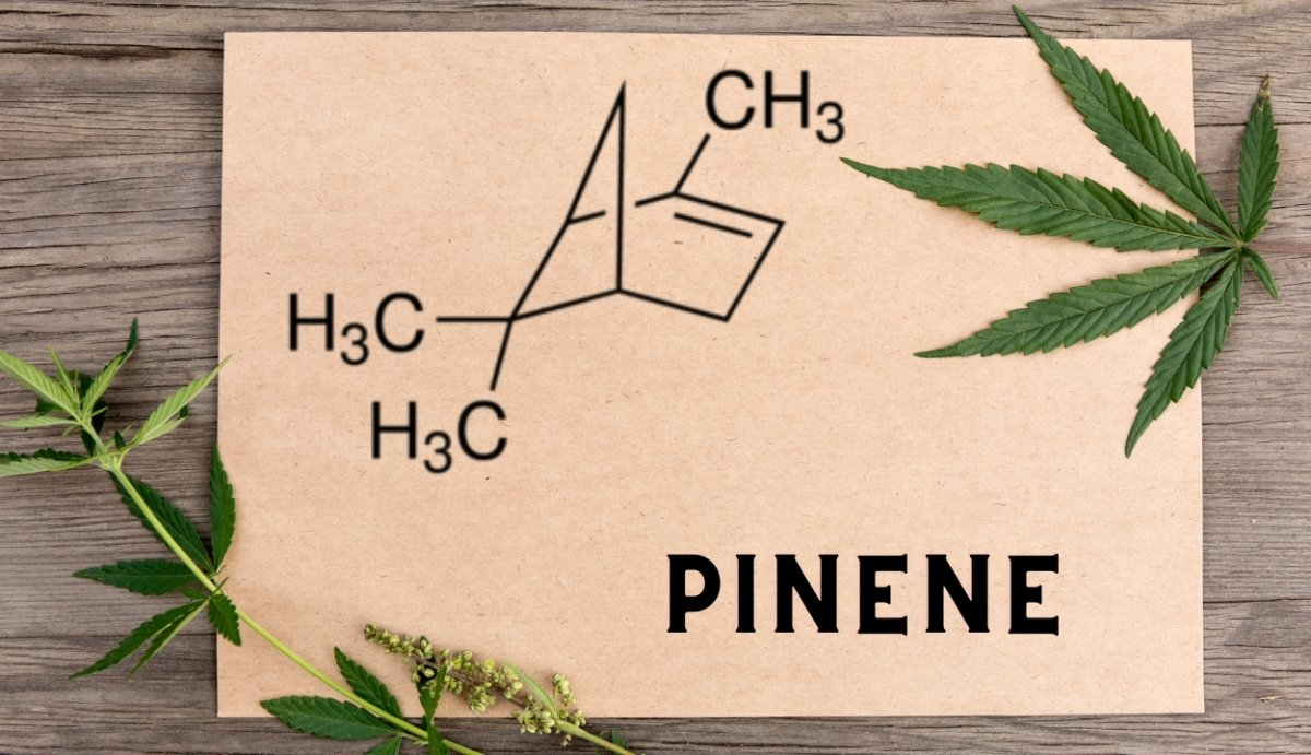 Pinene | Vida Optima