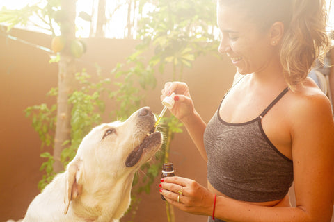 Broad Spectrum CBD is the most popular formula for pets.