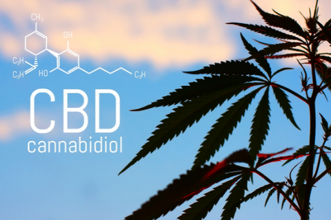 A model of CBD's molecular formula, which is entirely different from psychoactive THC's.