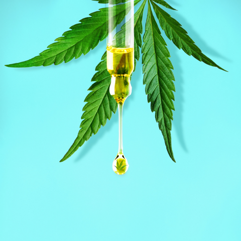 A dropper filled with CBD oil, one of the most popular forms of CBD found in Wisconsin.