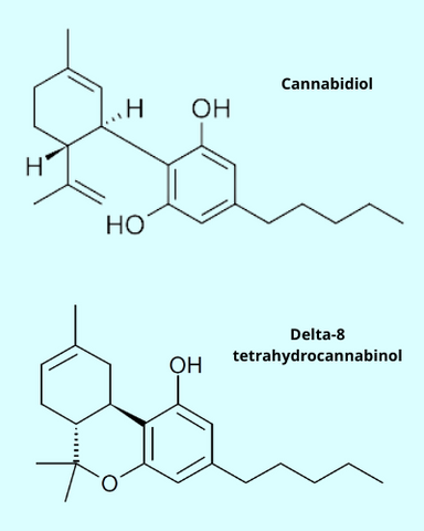 A model comparing the structure of the Delta-8 molecule and the CBD molecule.