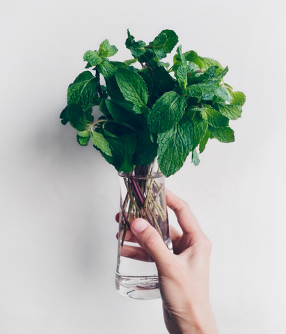 A jar full of fresh peppermint in water, which can be submerged in hot water to create a tea for soothing a nervous stomach.