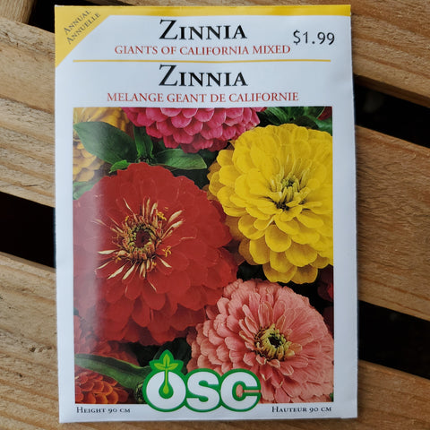 ZINNIA - CALIFORNIA GIANT