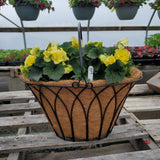 Yellow Solenia Basket Planter with Handle