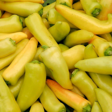 PEPPER - HUNGARIAN YELLOW WAX HOT