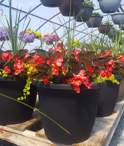 Big Begonia Planter for Sun or Shade