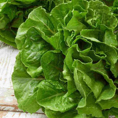 Seed - Lettuce Buttercrunch