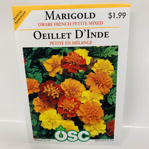 MARIGOLD - DWARF FRENCH