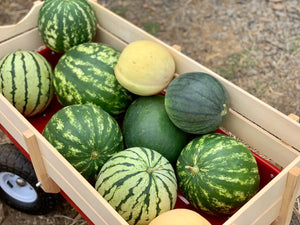 Organic Watermelon, Multiple Varieties