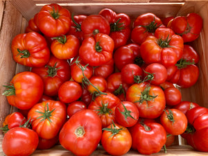 Organic Heirloom Tomatoes, Brandywine