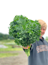 Load image into Gallery viewer, Organic Kale, Blue Curled Scotch