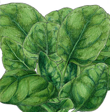 Load image into Gallery viewer, Organic Spinach