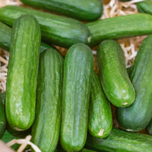 Load image into Gallery viewer, Pre-Order Organic Cucumbers: Muncher, Pickup Only