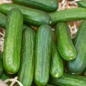 Pre-Order Organic Cucumbers: Muncher, Pickup Only
