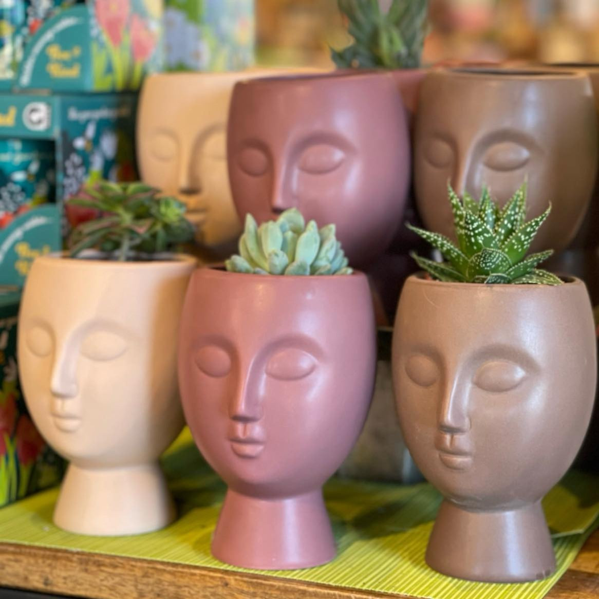 Neutral Face Planter