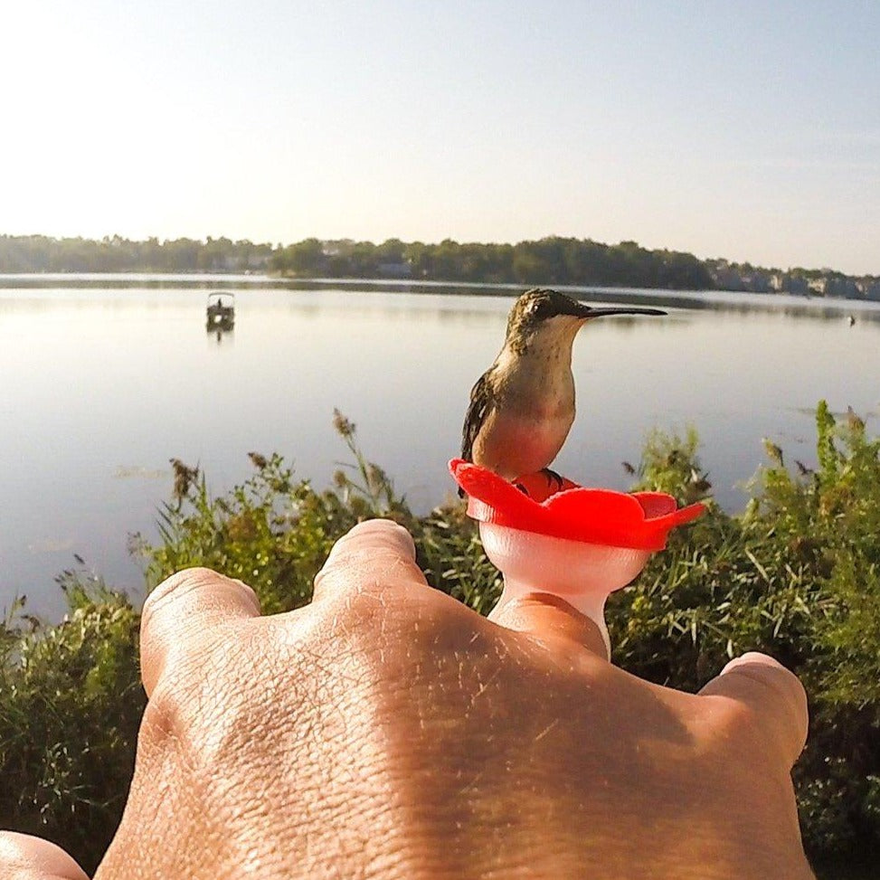 Hummingbird Feeder Ring
