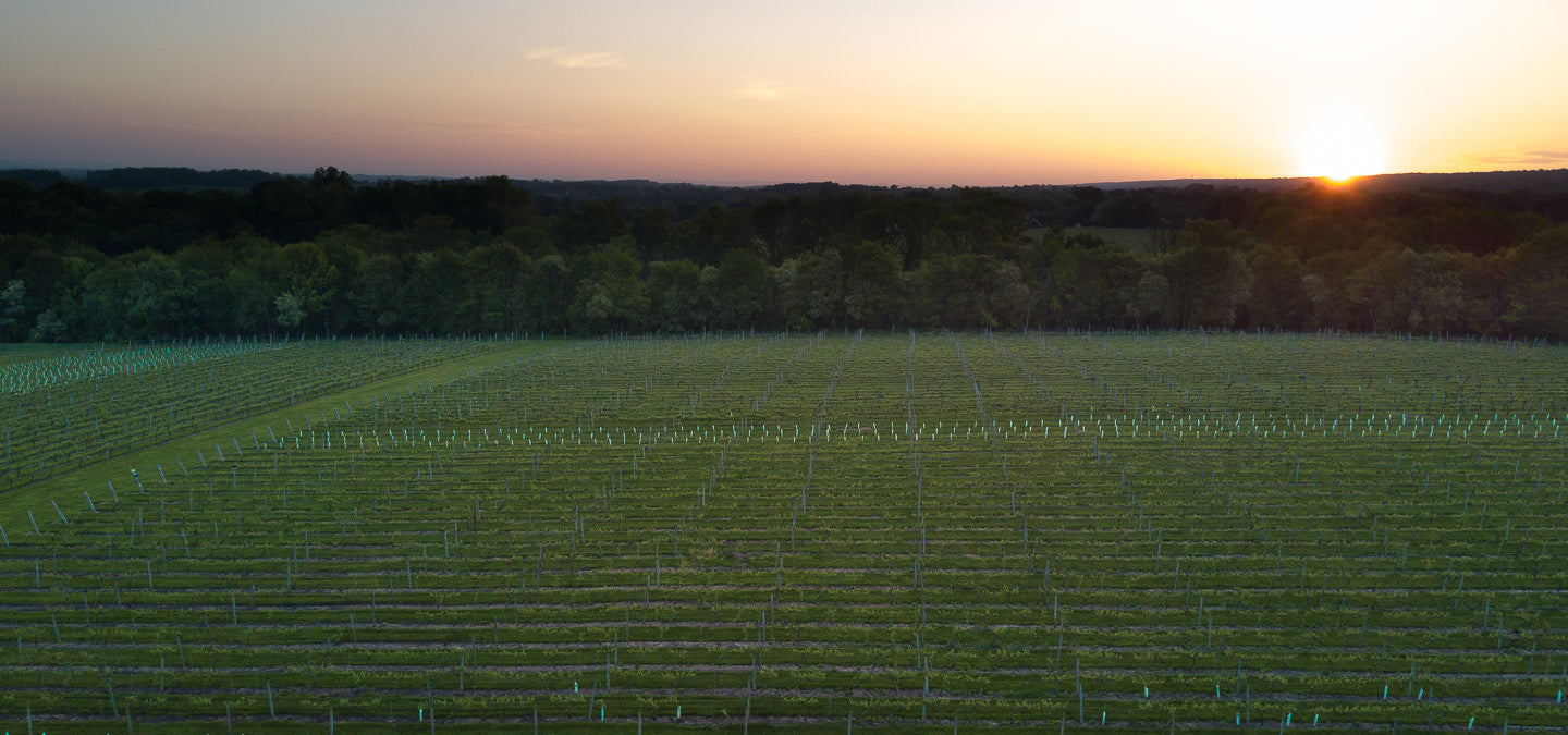Unionville Vineyard Sunrise