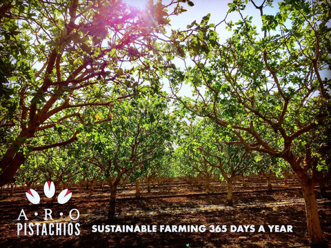 ARO Pistachios, sustainably family-farmed gourmet pistachio nuts at Orandi Ranch, established 1971