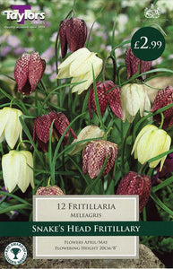 12 Snakes Head Fritillaria Bulbs
