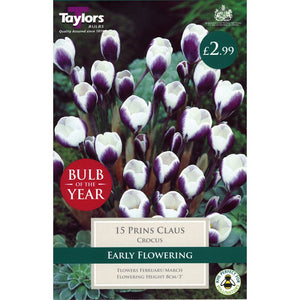 15 Prins Claus Crocus Bulbs