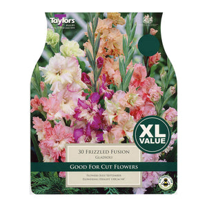 Gladioli Frizzled Fusion Bulbs XL