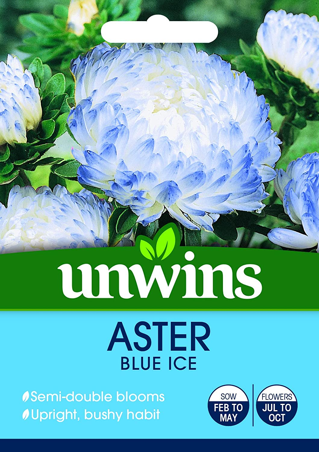 Aster Blue Ice - Seeds