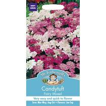 CANDYTUFT Fairy Mixed - Seeds