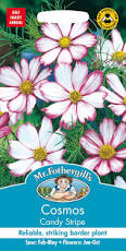 COSMOS Candy Stripe - Seeds