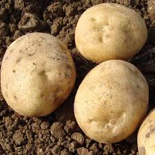 1kg Colleen - Seed Potatoes