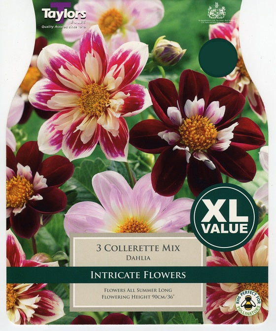 Dahlia Collerette Mixed XL Tubers
