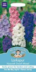 LARKSPUR Hyacinth Dwarf Mixed - Seeds