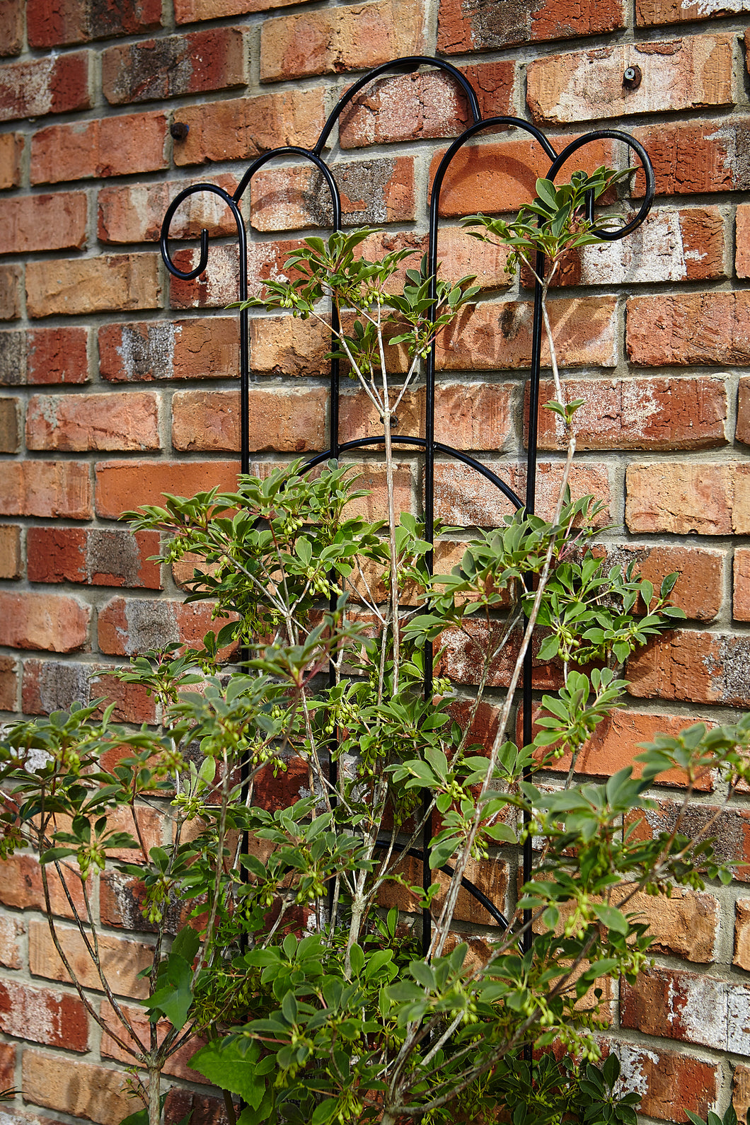 Deco Trellis - Small