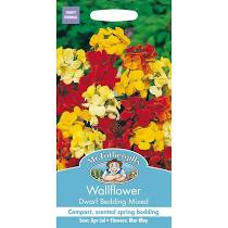 WALLFLOWER Dwarf Bedding Mixed - Seeds