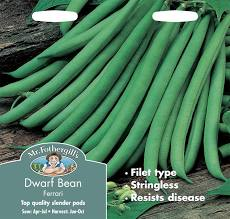 DWARF FRENCH BEAN Ferrari - Seeds