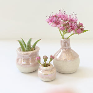 Pink pearl airplant holder