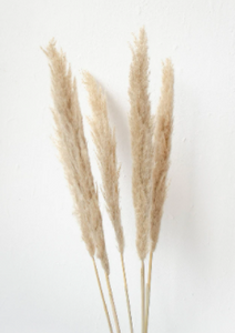 5' Natural Pampas Grass Bundle (3 stem bundle) - Florals and Foliage