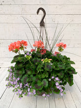 "Load image into Gallery viewer, 13"" Geranium Mixed Hanging Basket"