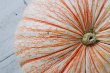 Load image into Gallery viewer, Specialty Pumpkin- Orange Stripe