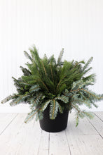 "Load image into Gallery viewer, 10"" Round Winter Planter - Base Greens"