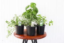"Load image into Gallery viewer, 4"" Herb Assortment"