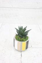 Load image into Gallery viewer, Mini Succulent: Neutrality