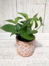 "Load image into Gallery viewer, 4.5"" Petite Mishima: Pothos"