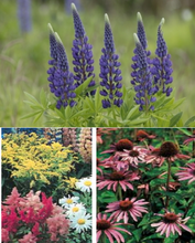 Load image into Gallery viewer, Perennial Flower Seeds