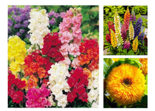 Load image into Gallery viewer, Flower Seeds