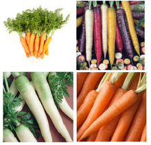 Load image into Gallery viewer, OSC Organic Vegetable Seeds: Carrot Seeds