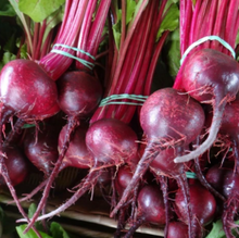Load image into Gallery viewer, Tourne-Sol Organic Vegetable Seeds: Beet Seeds